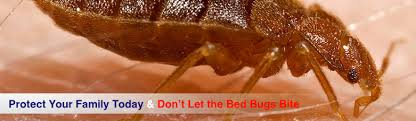 Bed Bug Com Experts In Bed Bug Protection And Prevention Products Usbedbugs Com