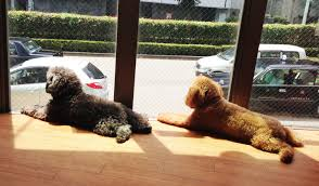 the top 10 animal cafes in tokyo time out tokyo