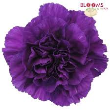 purple flowers purple flowers diy purple wedding flowers bloomsbythebox