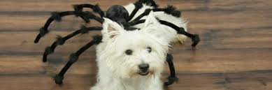 Spider Halloween Costume Dogs Spider Dog Costume Halloween Costume Ideas
