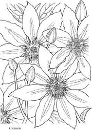 paisley flowers abstract doodle coloring pages colouring