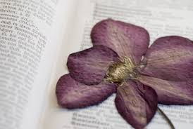 Drying Flowers In Books - mystifying flowers