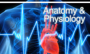 Anatomy And Physiology Study Tools Anatomy And Physiology Learning Activities What Is Difference