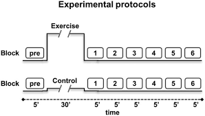 Armchair Aerobics Exercises Acute Effects Of Aerobic Exercise Promote Learning Scientific