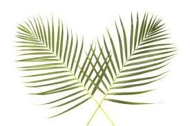 palm sunday palms for sale for palm sunday st francis of assisi parkview