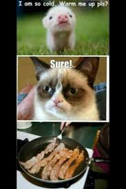 Tard The Grumpy Cat Meme - my favorite grumpy cat memes jayman s blog