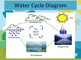 o u0027neill molly the water cycle