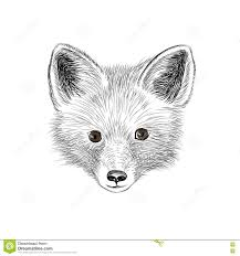 fox wild animal fox looking at camera fox baby sketch face stock