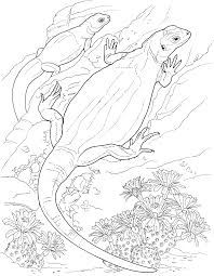 excellent lizard coloring pages best coloring 7265 unknown