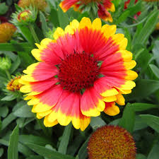 Weather Zones For Gardening - gulf coast gardening plants that take our weather