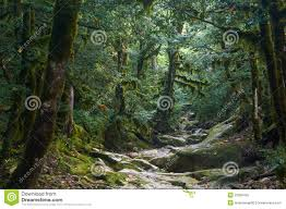spooky halloween images spooky halloween forest royalty free stock photo image 25365425