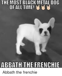 Abbath Memes - the most black metal dog of all time u u u abbath the frenchie