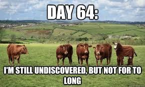 Funny Cow Memes - 16 hilarious cow memes
