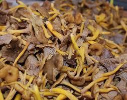 cuisiner les chanterelles grises chanterelles grises des marchés mtonmarché chignons délices des
