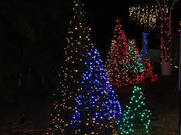 christmas lights at botanical gardens picture of florida