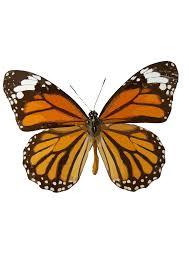 orange butterfly clip art at clker com vector clip art online