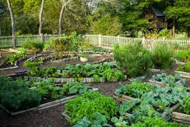 Small Backyard Vegetable Garden by Vegetable Garden Design Ideas Backyard Home Decor U0026 Interior