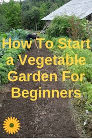 Gardening For Beginners Vegetables by Best 25 Vegetables Garden Ideas On Pinterest Vegetable
