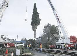 bay crane erects second largest rockefeller center christmas tree