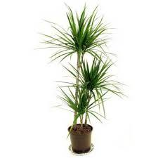 low light indoor trees easy houseplants houseplant low lights and houseplants