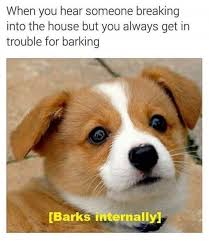 Orange Dog Meme - hear someone breaking into the house dog meme