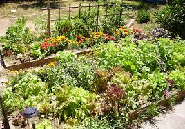 Insecticide For Vegetable Garden by Companion Planting Can Be A Form Of Natural Pest Control Al Com