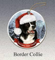 499 best other border collie stuff images on border