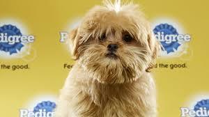 boxer dog rescue florida puppy bowl central florida players named mvps orlando sentinel