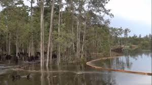 sinkhole swallows trees whole in louisiana swamp youtube