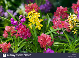 orchid plants mixed orchids plants cattleya orchid orchidgarden orchid garden