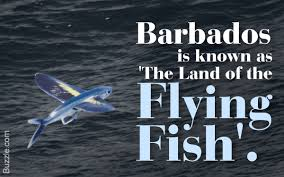 amazing facts about flying fish you must read now
