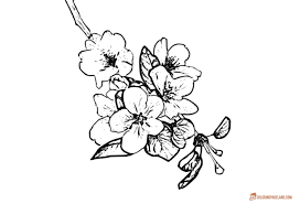 apple tree coloring pages apple tree coloring pages downloadable and printable collection