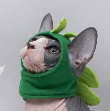 Godzilla Halloween Costumes Pet Costume Godzilla Dinosaur Halloween Cat Clothes Pet Hat