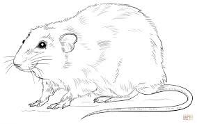 coloring page of a rat realistic rat coloring page free printable coloring pages