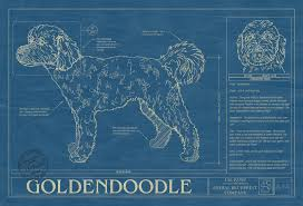 goldendoodle animal blueprint company goldendoodle dog blueprint