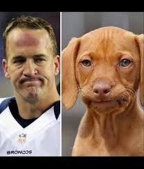 Annoyed Dog Meme - 22 meme internet peyton face dog peyton dog reactionface