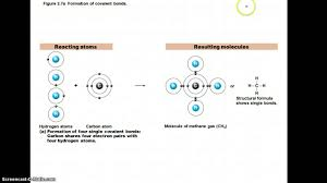 Chemistry In Anatomy And Physiology Chapter 2 Notes Part 2 Chemistry Comes Alive Youtube