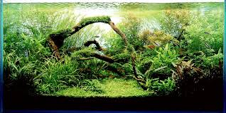 Aquascape Shop Google Image Result For Http Www Aquascapingworld Com Gallery
