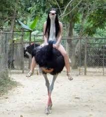 Ostrich Meme - dopl3r com memes ostrich girl or a girl riding an ostrich