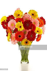 gerbera bouquet gerbera stock photos and pictures getty images