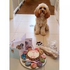 dog birthday cake personalised dog birthday cake top dog apparel