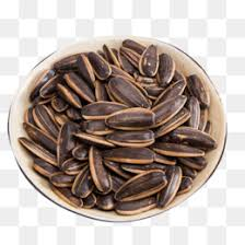 sunflower seeds png images vectors and psd files free download