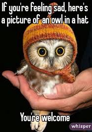 Feeling Sad Meme - you re feeling sad here s a picture of an owl in a hat you