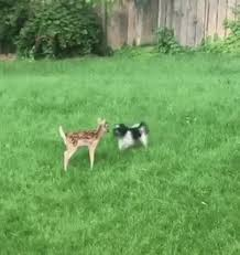 Dog In The Backyard by Dog And Bambi Playing Together In The Backyard Funny Pinterest