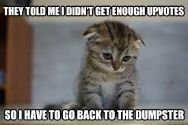 Cute Kittens Memes - community 12 very sad kittens that never quite became a meme my
