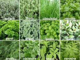 les herbes de cuisine les herbes aromatiques le régime des
