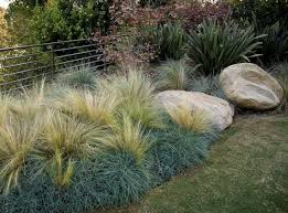 best 25 landscape grasses ideas on landscape