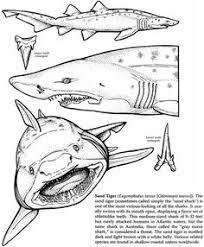 dover publications sharks coloring book tattoo