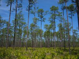 Florida forest images Mount carrie wayside florida hikes jpg