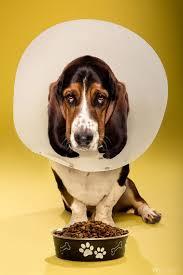 the u0027trials and tribulations u0027 of dogs photos abc news